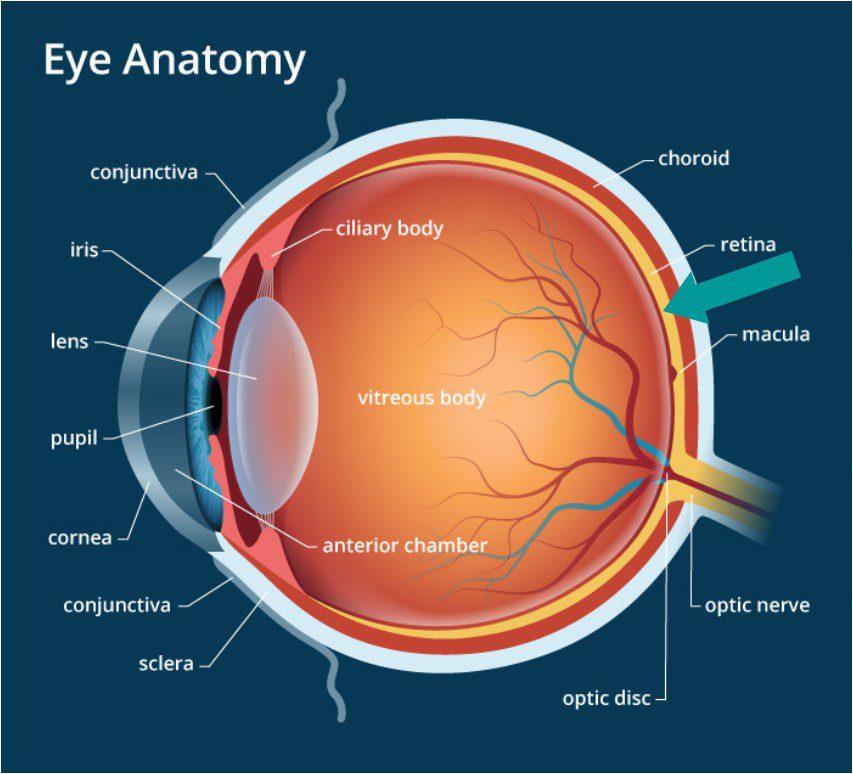 Eye Diagram Retina